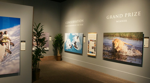 Brian Hampton's Grand-Prize-winning image of a lioness in Botswana was displayed in an exhibition at the Smithsonian's National Museum of Natural History that honored winners of the 2008 Nature's Best Photography Windland Smith Rice International Awards. Hampton created the 5 ft. x 8 ft. exhibition print himself, using onOne Software's Genuine Fractals, ImagePrint RIP software, LexJet Sunset Photo eSatin paper, and a  64-in. Epson Stylus Pro 11880 printer. Hampton mounted the print onto Gator board using his wide-format laminator. Read the full story in LexJet's In Focus Vol. 4, No. 1.