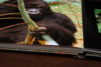 Africa coffee table book