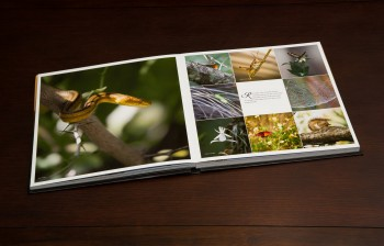Everglades coffee table book