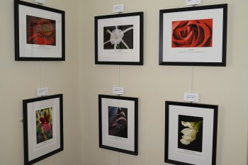Inkjet prints of botanical photography