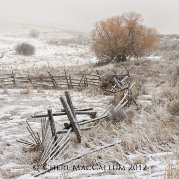Snow Morning Award Winning Photo by Cheri MacCallum