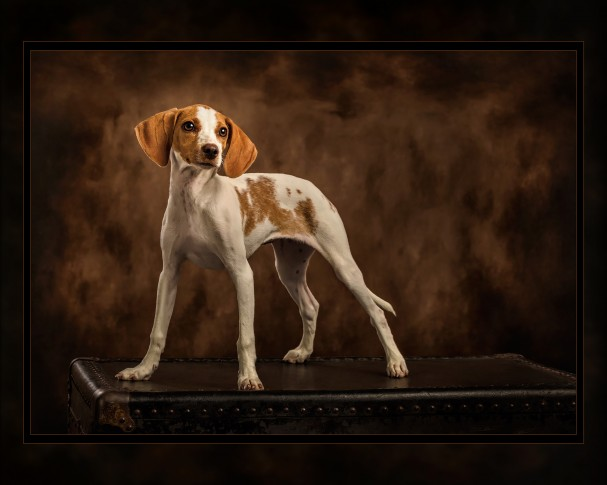 Dog Photography by Kenny King
