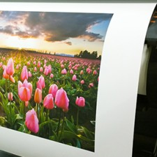 Sunset Photo Matte Paper 280g is now available exclusively at LexJet. Ideal for fine-art reproduction, high-quality fine photo prints, photo albums and high-end poster décor, the smooth archival paper produces superior color saturation and a high Dmax for high-impact image reproduction.