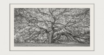 "Kari Douma's National Sunset Print Award winning image, ""Aged Gracefully."""