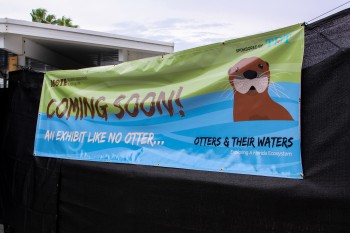Mote's new otters exhibit is scheduled to open in early 2016.