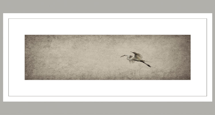 Prints That Win: In Flight With Twigs