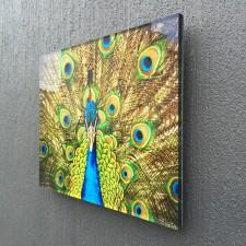 side_angle_peacock
